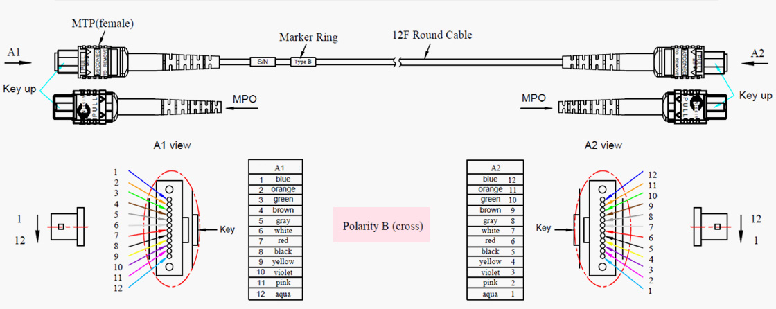 MPO/MTP Patch Cord_41.jpg